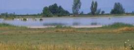 Neusidler See