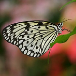 Motýlí dům (Das Schmetterlinghaus)