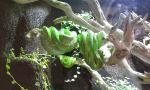 Terárium s hady