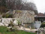 Zoo Vídeň tučňáci, autor: Mudr. Dastychová