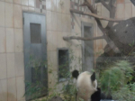 Panda, autor: Mudr. Dastychová