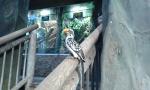 Tropický dům - papoušek
