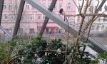 Tropický dům - opice